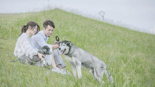 新人與愛犬在八里米飛公園往山丘上的草地上嬉戲,拍攝雲朵輕婚紗微電影